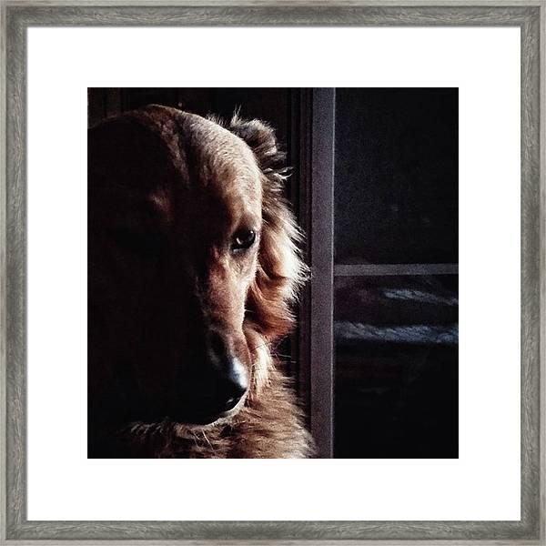 Chuvak #portrait #dogsofinstagram #dog Framed Print