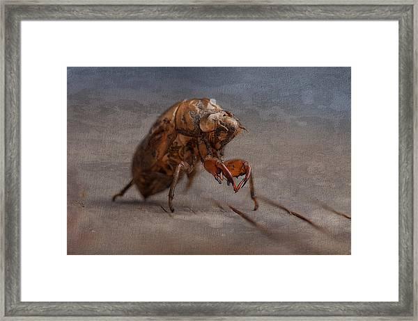 Cicada Shell Framed Print