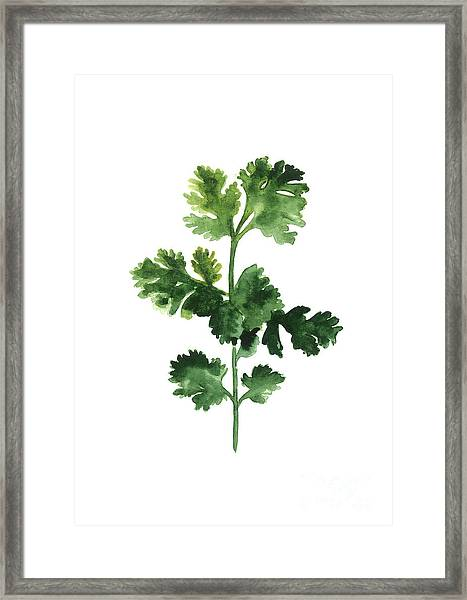 Cilantro Watercolor Art Print Painting Framed Print