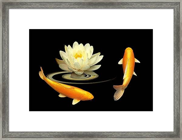 Circle Of Life - Koi Carp With Water Lily Framed Print