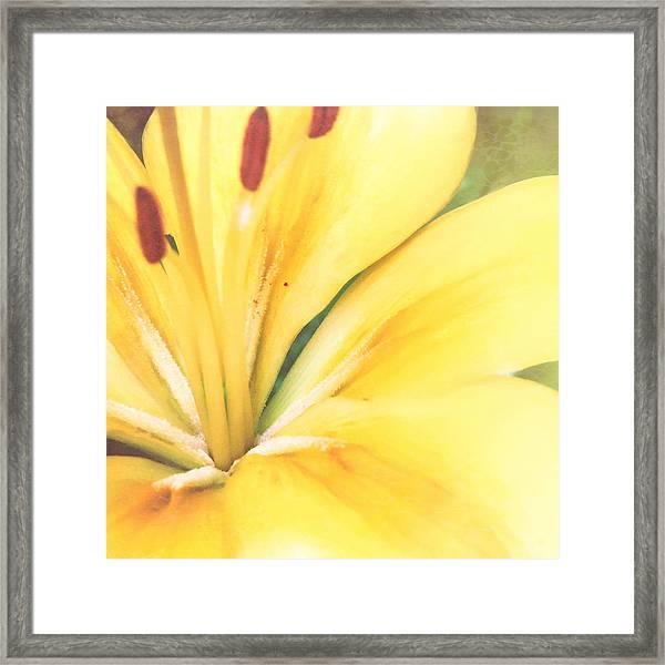 Citrine Blossom Framed Print