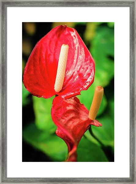 City Garden Flowers Framed Print