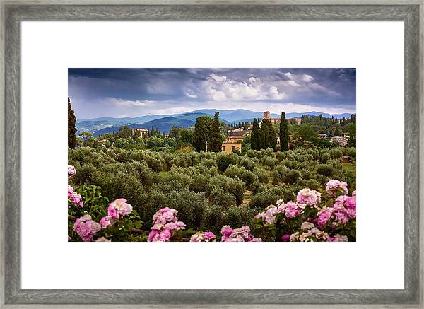 Tuscan Landscape With Roses And Mountains In Florence, Italy Framed Print