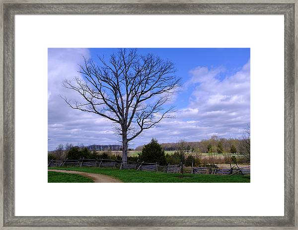 Civil War Fence And Tree With No Leaves Next In Gettysburg Penns Framed Print