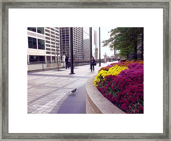 Civilization And Birds Framed Print
