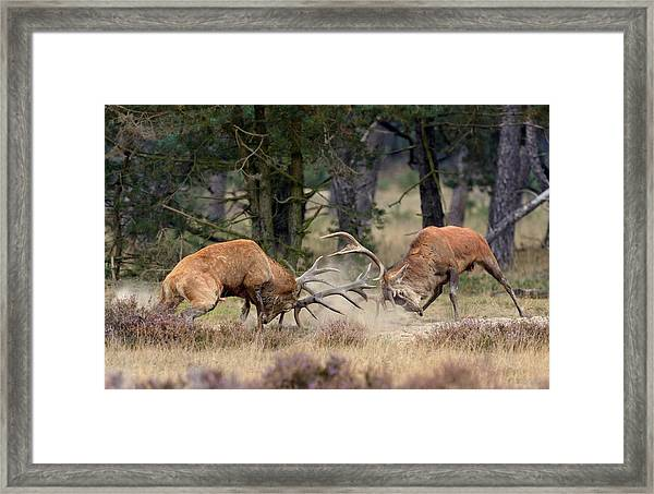 Clash Of The Titans Framed Print by Roelof Janssens