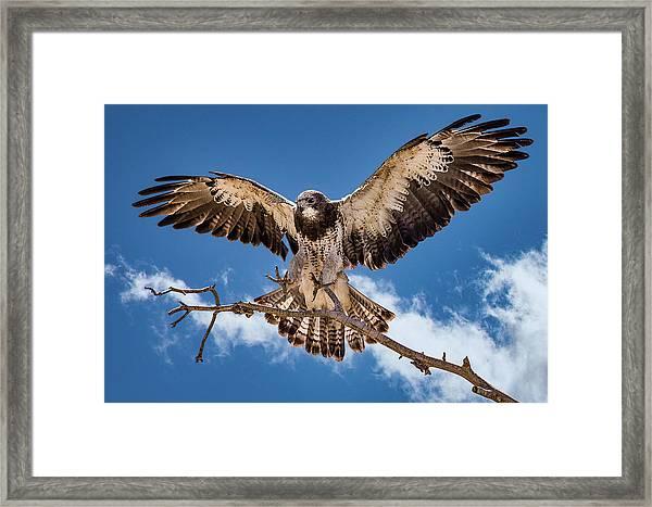 Cleared For Landing Framed Print
