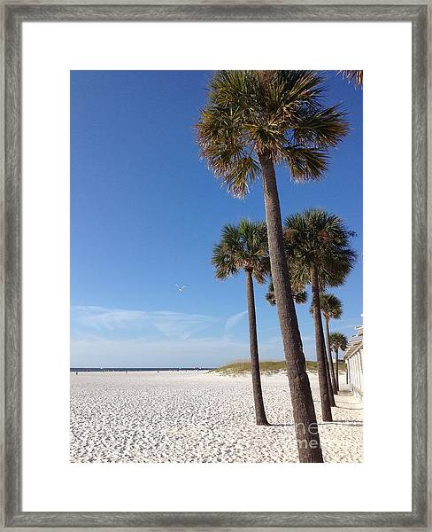 Clearwater Palms Framed Print