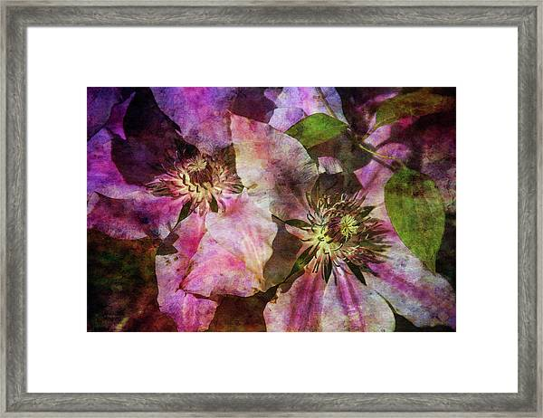 Clematis 9569 Idp_2 Framed Print