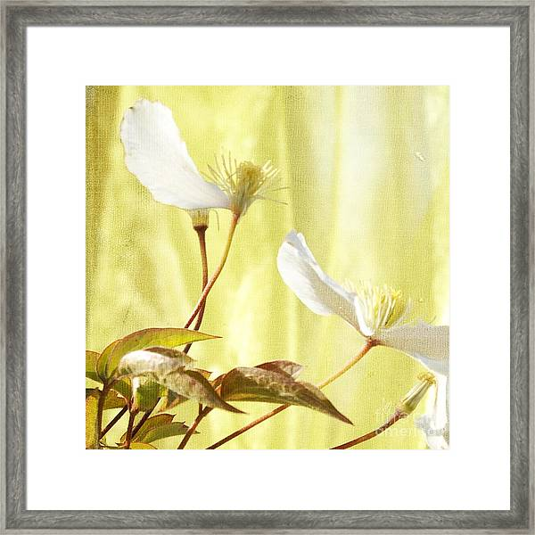 Clematis And Sunshine Framed Print