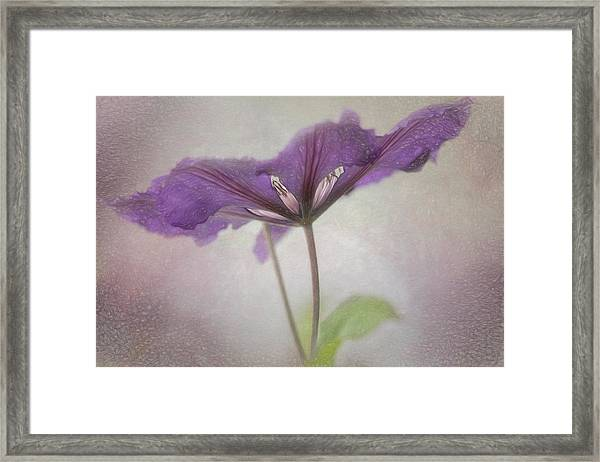 Clematis Eyes Framed Print