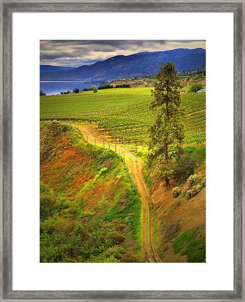 Climbing In Colour Framed Print
