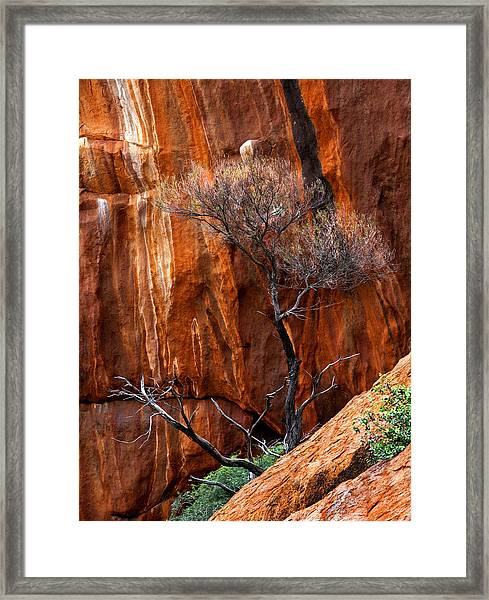 Clinging To Life Framed Print