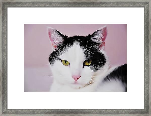 Cloe Framed Print