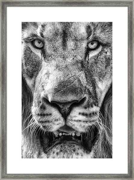 Close And Personal Framed Print
