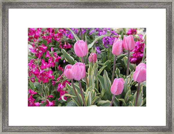 Close Up Mixed Planter Framed Print