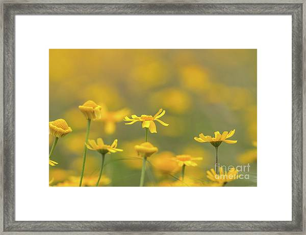 Close Up Of Yellow Flower With Blur Background Framed Print