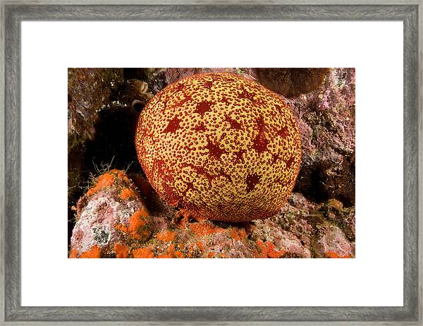 Closeup Of A Colorful Cushion Star Framed Print