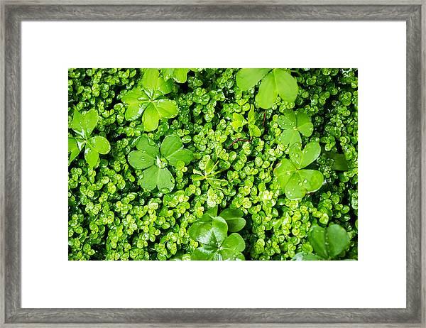 Lush Green Soothing Organic Sense Framed Print