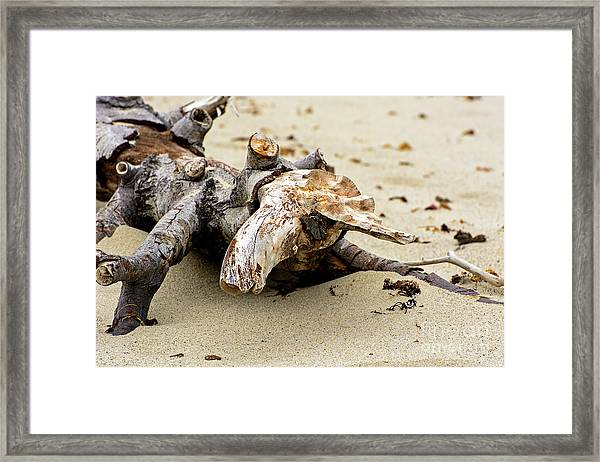 Closeup Of Unicorn Resting On A Beach Framed Print