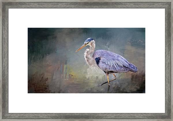 Closing-in, Great Blue Heron Framed Print