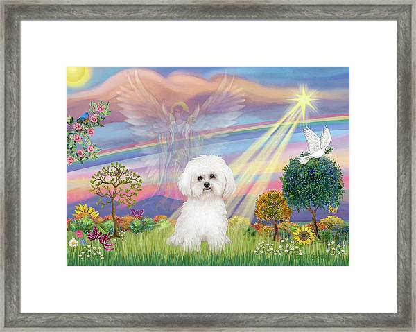 Cloud Angel And Bichon Frise Framed Print