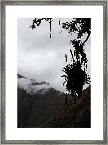 Cloud Forest Musings Framed Print