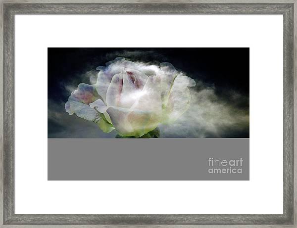 Cloud Rose Framed Print