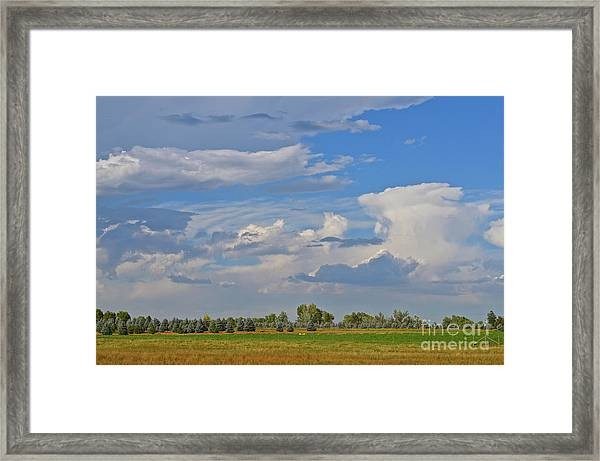 Clouds Aboive The Tree Farm Framed Print