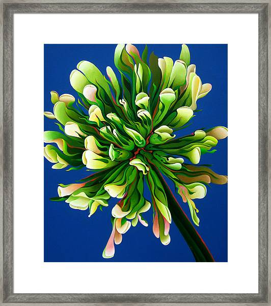 Clover Clarification Indoctrination Framed Print