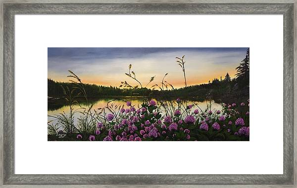 Clover Sunrise  Framed Print