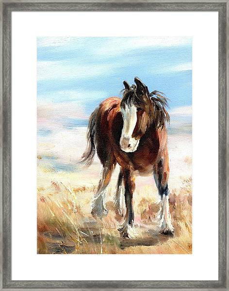 Clydesdale Foal Framed Print