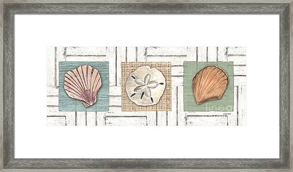 Coastal Shells 1 Framed Print