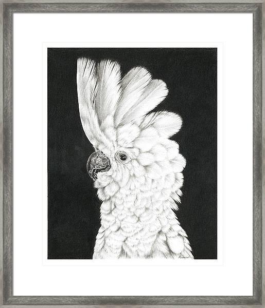 Cockatoo Framed Print