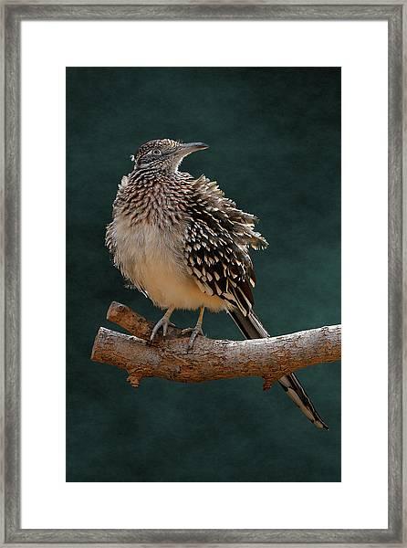 Cocoa Puffed Cuckoo Framed Print