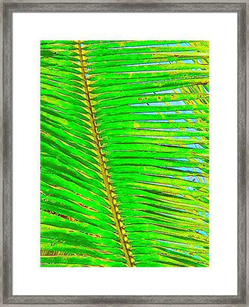 Coconut Palm Leaf Aloha Framed Print