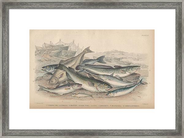 Cod And Halibut Framed Print