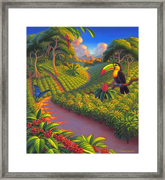 Coffee Plantation Framed Print