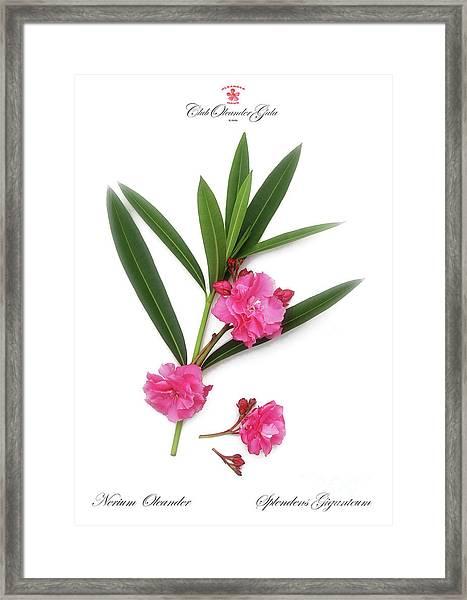 Cog  Nerium Oleander Splendens Giganteum Framed Print