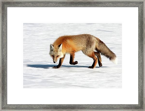 Cold Spring Day Framed Print