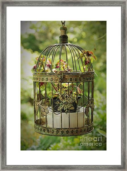 Coleus In Vintage Birdcage Framed Print