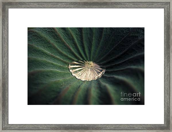 Collected Framed Print