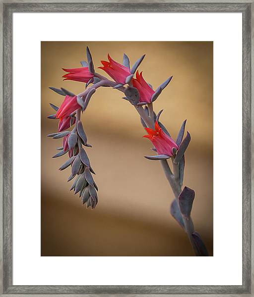 Color And Curve Framed Print