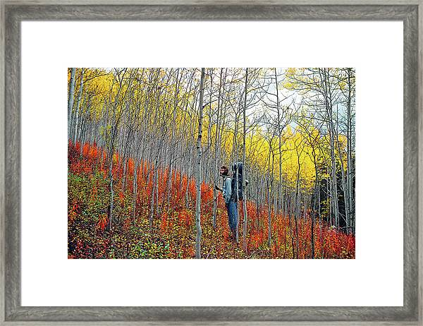 Color Fall Framed Print