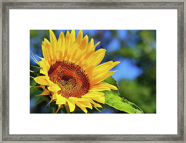 Color Me Happy Sunflower Framed Print