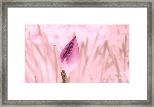 Color Trend Flower Bud Framed Print