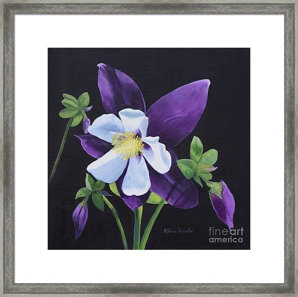 Colorado Blue Columbine Framed Print