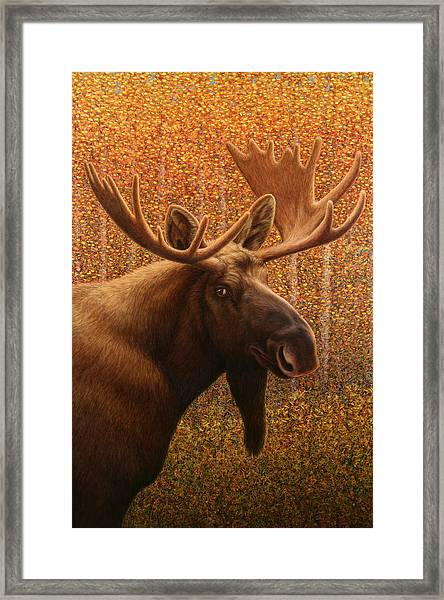Colorado Moose Framed Print