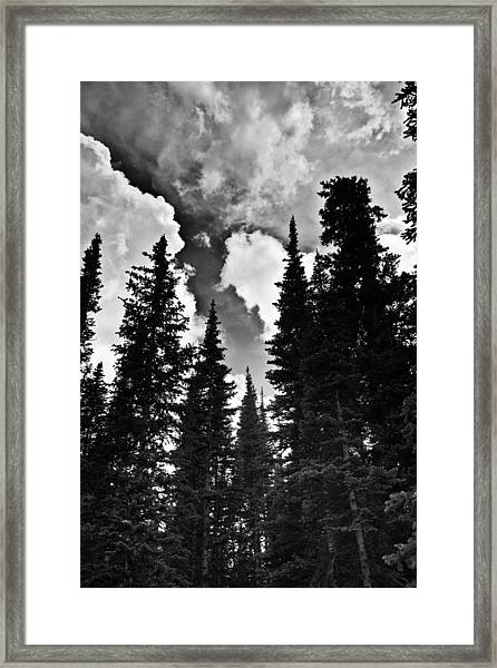 Colorado Trees Framed Print by Patrick  Flynn