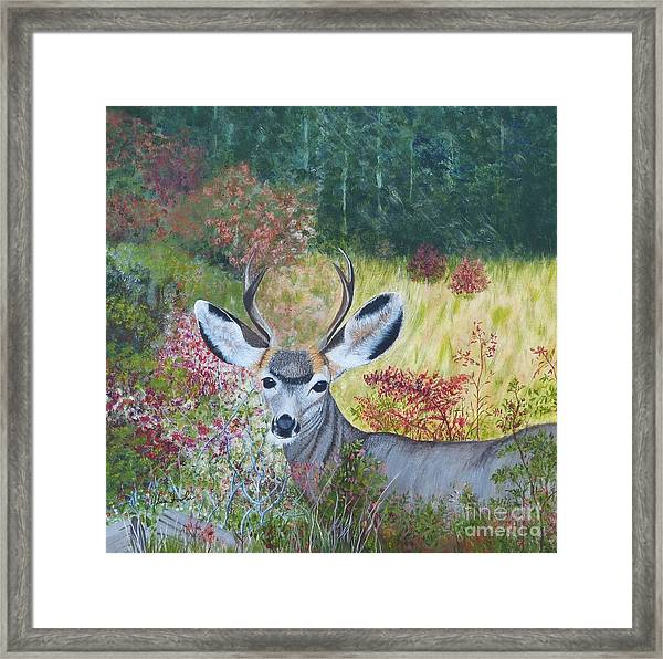Colorado White Tail Deer Framed Print